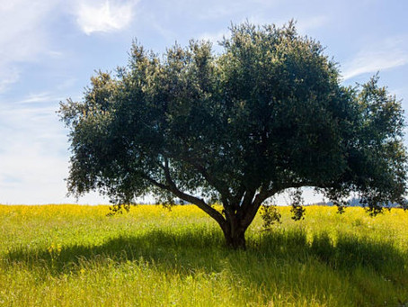 Mark 4:26-34 - The ministry of mustard plants (metaphorically speaking)