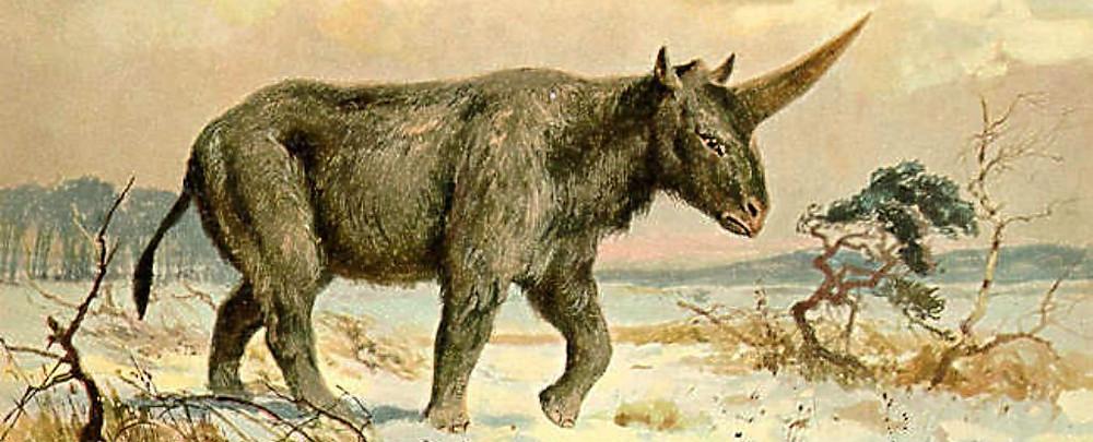 Image result for pictures of Elasmotherium sibiricum
