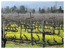 grapevine trellises 2