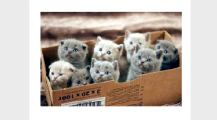 Trained kittens?