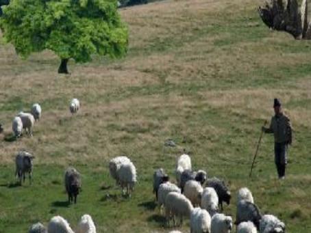 Psalm 23 - Yahweh is my Good Shepherd
