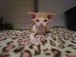 Jennelrex chatons 29