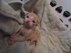 Jennelrex chatons 4