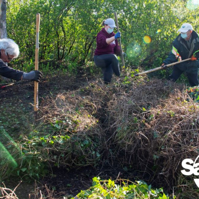 Pulling Together Volunteers in Saanich Parks