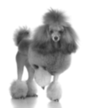 Dog Grooming & Syling