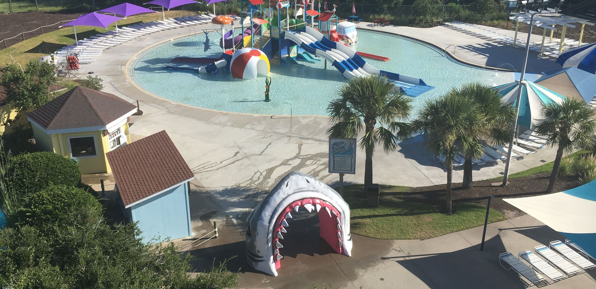 shark d.jpg