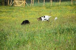 animaux moulin26 04 19 J Merlet - 14