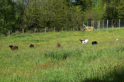 animaux moulin26 04 19 J Merlet - 15