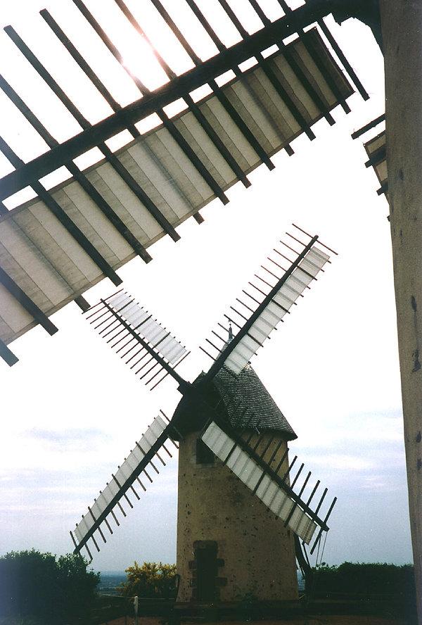 Terrier marteau  1997-J.Merlet -2.jpg