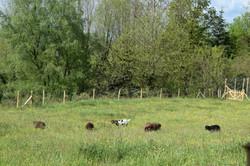 animaux moulin26 04 19 J Merlet - 17