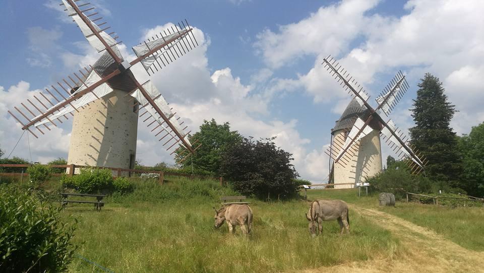les anes JG Emerit.jpg Les deux anes tondent l'herbage autour des moulins à  vent
