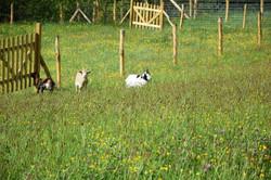 animaux moulin26 04 19 J Merlet - 18