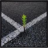 直角交叉植物