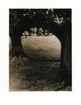 奈良公園 平成31年