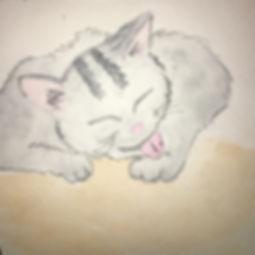TIn kitten.jpg