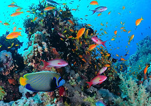 coral-fish-0.jpg