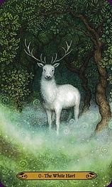 forest fool.jpg