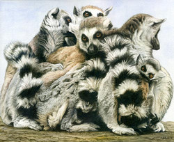 A Number of Lemurs