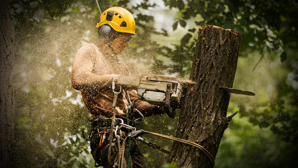 Landscaping_Forestry_updated.jpg