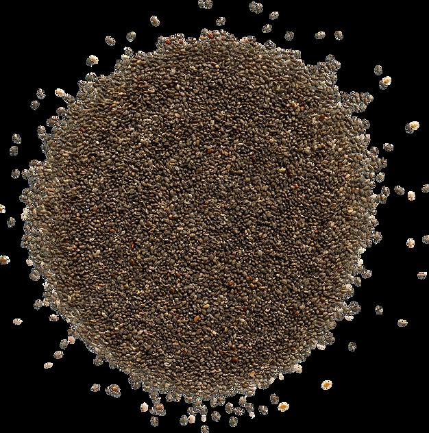 Seeds-v2.png