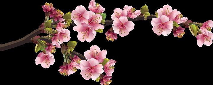 67-675841_sakura-png-cherry-blossom-bran