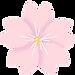 flowers-3205083_960_720.webp