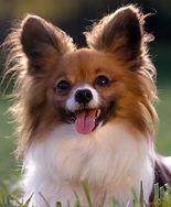 cute-puppies-dogs21.jpg