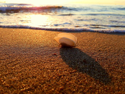 shell-2709696_1920