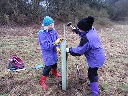 FoC tree planting 9.JPG