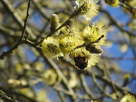Bees1.JPG