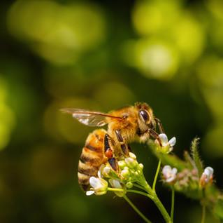 Pour une plus grande protection de la biodiversité en Suisse comme ailleurs