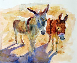 Kams donkeys.jpg