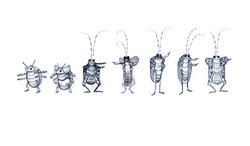 sl_insect_sketches03