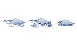 sl_turtle_side