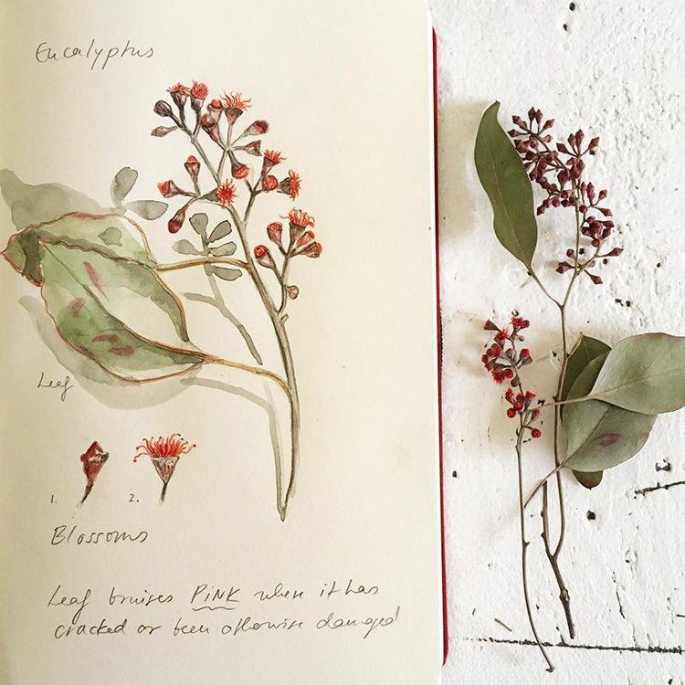 Een botanisch dagboek onthaast en nodigt uit om met aandacht naar de natuur te kijken. Tijdens de 4 daagse zomercursus `Botanic diary` leer je constructief complexe vormen uit de natuur na te schilderen / tekenen zoals bloemen / kruiden / bomen. Geef je nu op voor deze mindfull zomercursus!