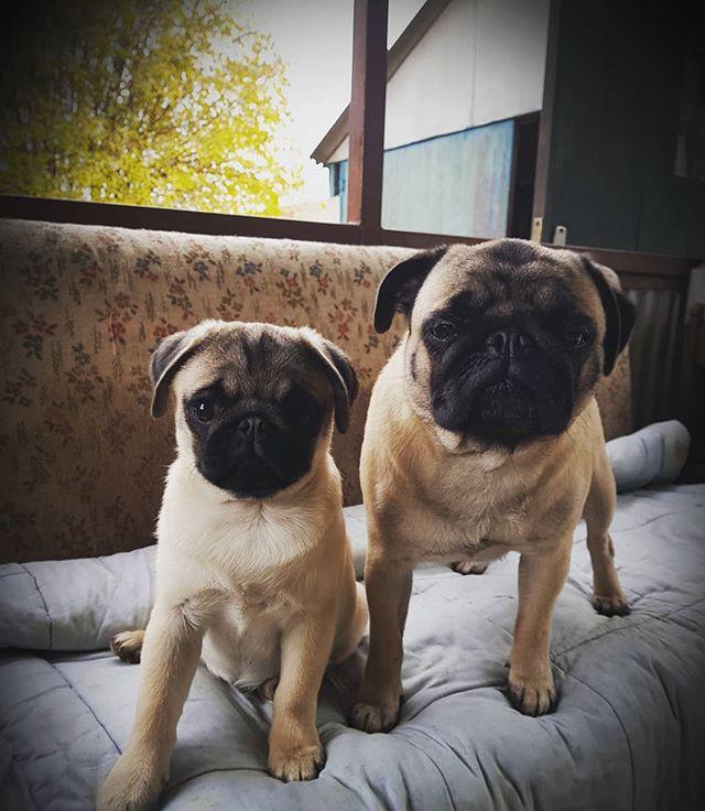 ❤Rosie and Perec❤ #selfie #dogselfie #la