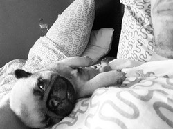 Little Love 😍😍😍 #pug #pugpuppy #puppy