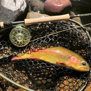 Fly Fishing: Advanced Tactics