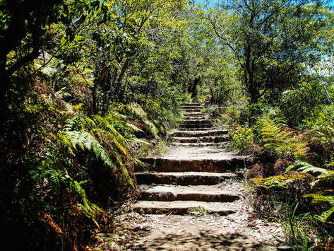 Sydney's Amazing Walks