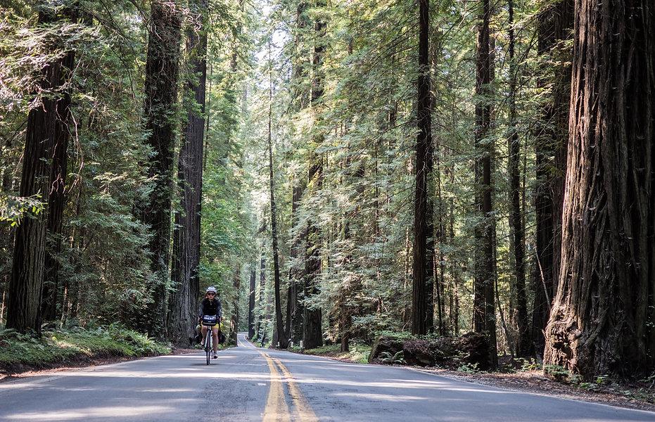 photographie d'aveture, une fille à vélo dans une foret caliornie
