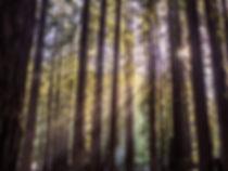 Photographie du soleil à travers les arbres en californie dans les redwoods