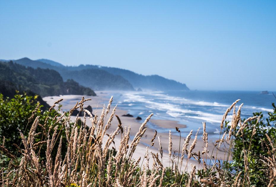 photographie de paysage de plage avec epis de blé