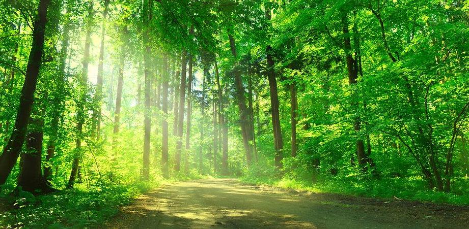 zdrowie las -  - akademia świadomego istnienia