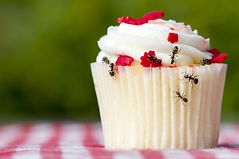 Closeup view of ants on a cupcake. There