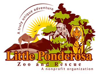 Little ponderosa zoo.png