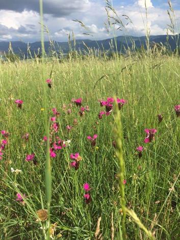 Blumenpracht auf dem Dittinger Feld