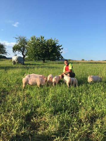 Bioschweine aus Dittingen
