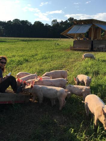 Unsere ganz jungen Bioschweinli auf dem Dittinger Feld