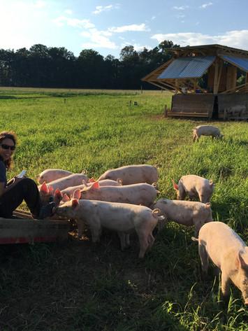 Unsere jungen Bioschweine