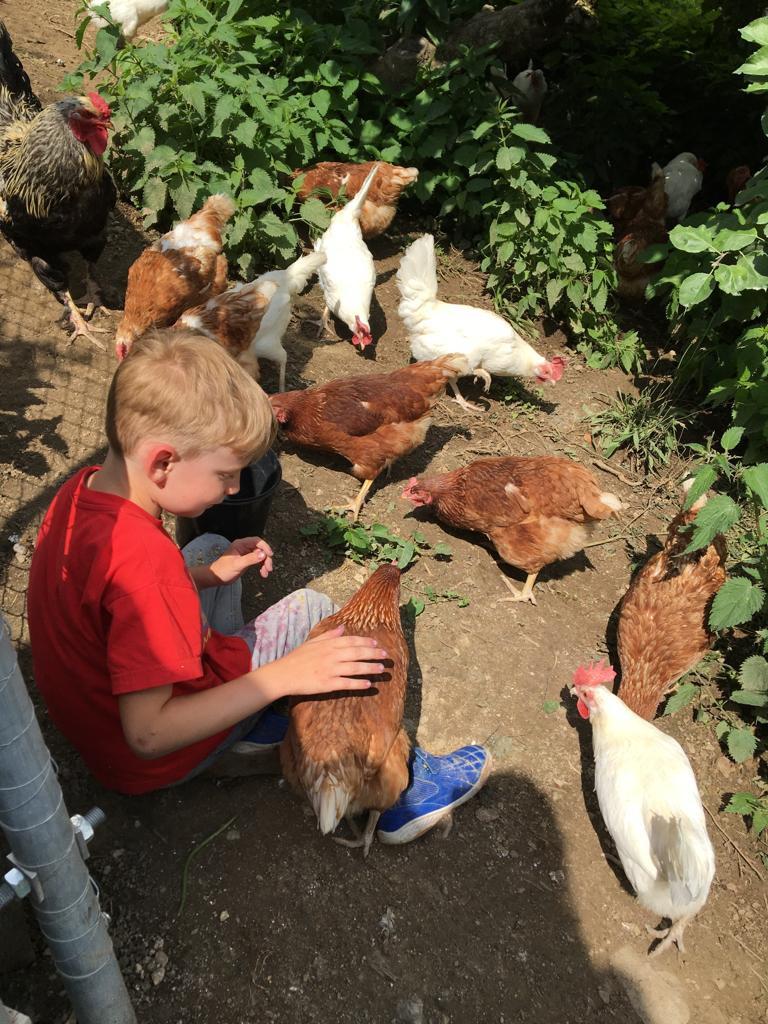 Unsere Hühner haben viel Auslauf und Freiheit